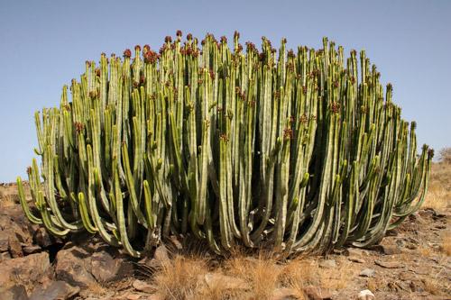 Didacta sociales tema 3 la diversidad h drica y for Pisos de vegetacion canarias