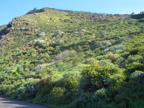 5 medio natural municipios tenerife gevic gran for Pisos de vegetacion canarias