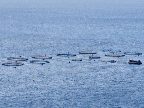 Agricultura ganadera y pesca municipios tenerife for Vivero para peces