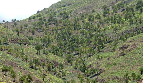 Zona de bosque term filo naturaleza gevic gran for Pisos de vegetacion canarias
